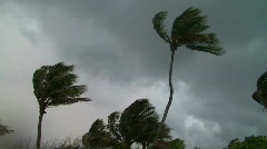 Stormy Palm Trees - stock footage