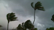 Stormy Palm Trees Stock Footage