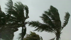 Windy Palms Stock Footage