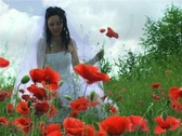 Stock Video Footage of Beautiful bride in poppy field