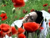 Beautiful bride in poppy field Stock Footage