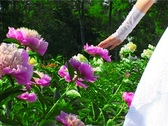 Woman's hand touching violet flower Stock Footage