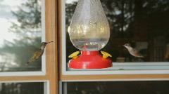 Two hummingbirds. Stock Footage
