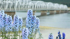 Flower blue bell bridge P HD 0121 Stock Footage