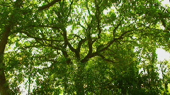 Countryside tree light wind green gentle shake quiet place relax Stock Footage