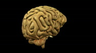 Stock Video Footage of Looping Brain Animation 01
