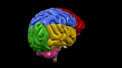 Looping Brain Animation 03 - stock footage