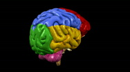Stock Video Footage of Looping Brain Animation 03