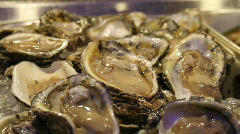 Fresh Raw Oysters - stock footage