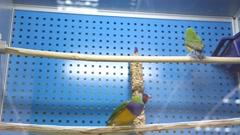 Stock Video Footage of Little birds