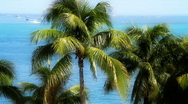 Palm Trees and Boats Stock Footage