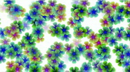 Stock Video Footage of color wild flower flow background.Vegetables,bloom,floral,love,petals,