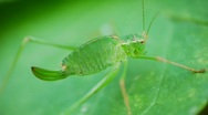 Grashopper - unprocessed - for the pros Stock Footage