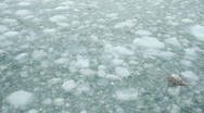 Stock Video Footage of Glacier ice floating in ocean P HD 8351