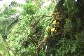 Hurricane Earl - Fallen Trees on road side Footage
