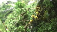 Stock Video Footage of Hurricane Earl - Fallen Trees on road side