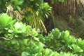 Hurricane Earl - Bird kicks out other bird from branch Footage