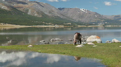 Horse eat grass at mountain lake Khoton Nuur in Mongolian Altai Stock Footage