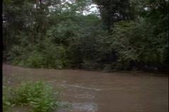 Amazonin viidakkoon, veneretki, POV kautta katoksen yläpuolella puita, medium Arkistovideo