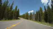 Stock Video Footage of time-lapse drive through pine forest, no cars