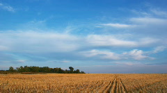 Countryside evening landscape clouds on blue sky over yellow field - stock footage
