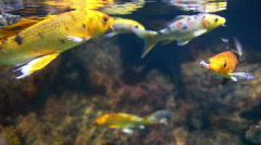Exotic Fish 1851 Stock Footage