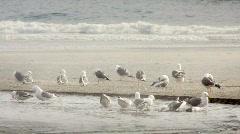 Seagulls on the beach-HD Stock Footage