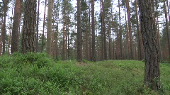 forrest and estonian sauna house - stock footage