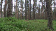 Forrest and estonian sauna house Stock Footage