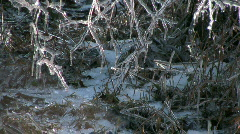 Ice-Coated Branches Stock Footage