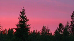 Pink and purple sky above estonian trees Stock Footage