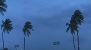 Stock Video Footage of Lightning - Storm Fiona - Thunderstorm-Lightning behind Palm Trees w audio