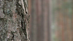 dof forrest tree - stock footage