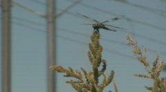 Dragon Fly Sits On a Weed and Eats With Trax Rails in the Background 3 Stock Footage