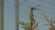 Stock Video Footage of Dragon Fly Sits On a Weed and Eats With Trax Rails in the Background 3