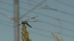 Dragon Fly Close up and Trax Train Goes By Stock Footage