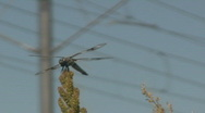Stock Video Footage of Dragon Fly Close up and Trax Train Goes By