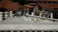 Pigeons in Siena Footage
