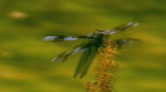 Dragon Fly Sits On a Weed and Eats 2 Stock Footage