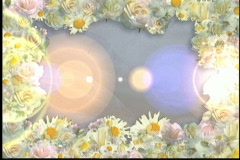 1648L Flower Flairs Stock Footage