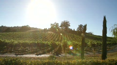 Stock Video Footage of Vineyard Summer Harvest