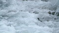 Salmon swimming upstream P HD 7440 Stock Footage