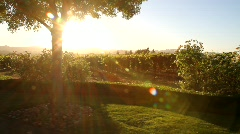 Vineyard Sunset Flare Stock Footage