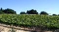 Vineyard Pan 2 Footage