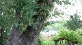 Beautiful Sonoma Vineyard HD Footage