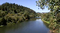 Russian River Foreground Tree HD Footage
