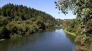 Stock Video Footage of Russian River Foreground Tree