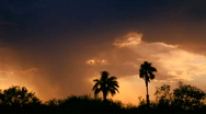 Stock Video Footage of Time Lapse Palm Tree Rain Shafts