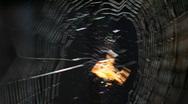 Spider 01 Stock Footage