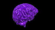 Stock Video Footage of Looping Wireframe Brain Animation 16